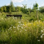 Scraptoft Natural Burial Site