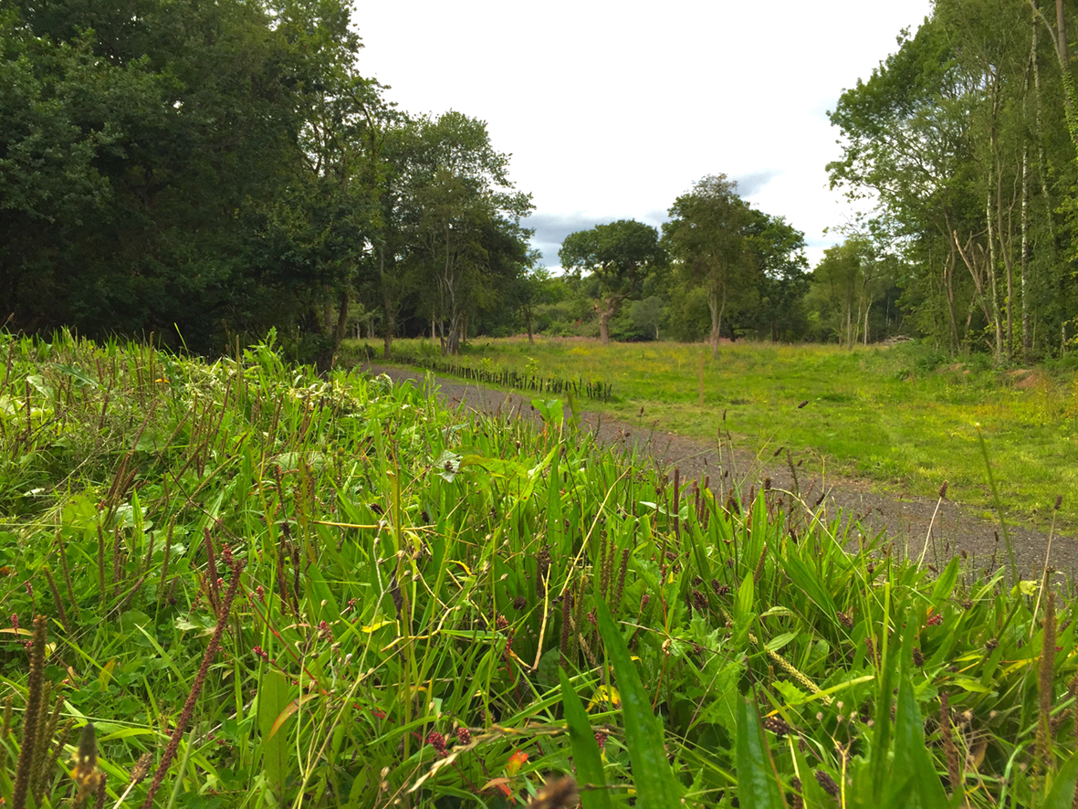 Wrottesley Park Natural Burial Ground