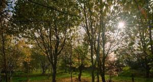 Autumn 2017 1.(1)